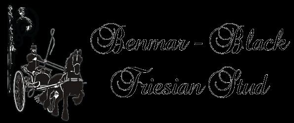 BENMAR-BLACK FRIESIAN STUD